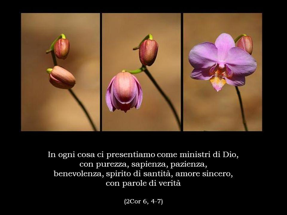 In ogni cosa ci presentiamo come ministri di Dio, con purezza, sapienza, pazienza, benevolenza, spirito di santità, amore sincero, con parole di verità (2Cor 6, 4-7)