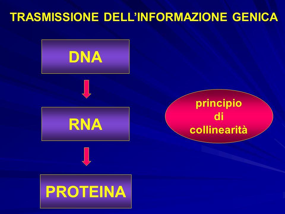 TRASMISSIONE DELL'INFORMAZIONE GENICA
