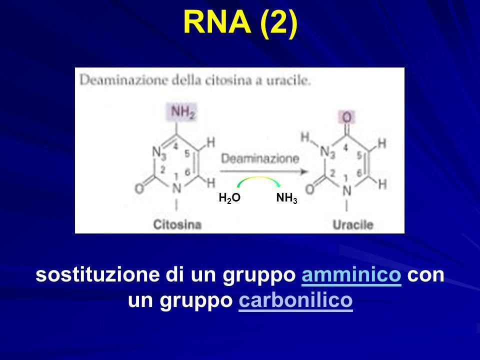 sostituzione di un gruppo amminico con un gruppo carbonilico