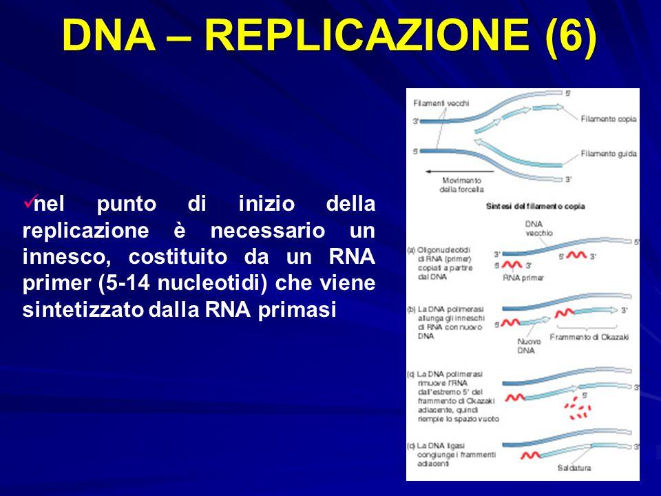 DNA – REPLICAZIONE (6)