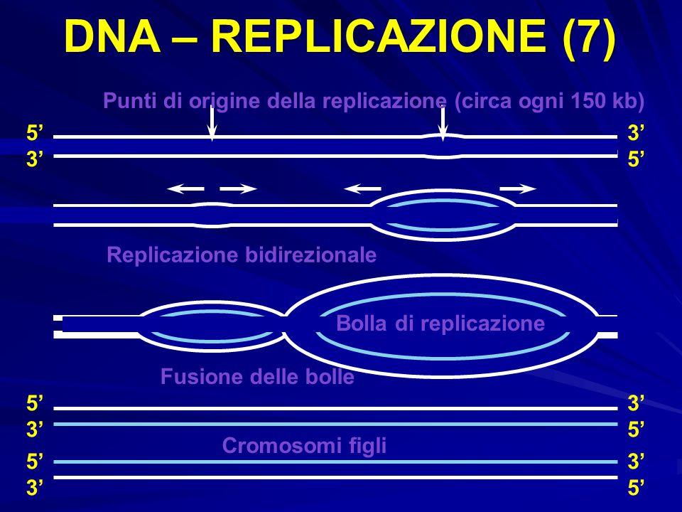 DNA – REPLICAZIONE (7) Punti di origine della replicazione (circa ogni 150 kb) 5' 3' 3' 5' Replicazione bidirezionale.