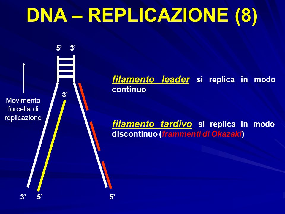 Movimento forcella di replicazione