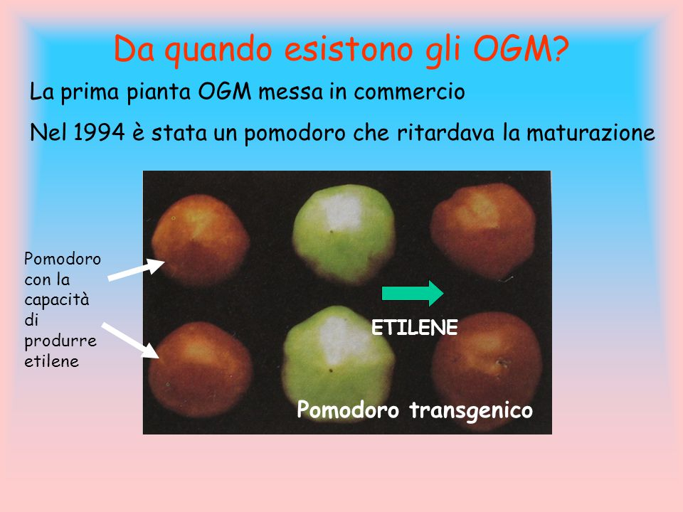 Da quando esistono gli OGM