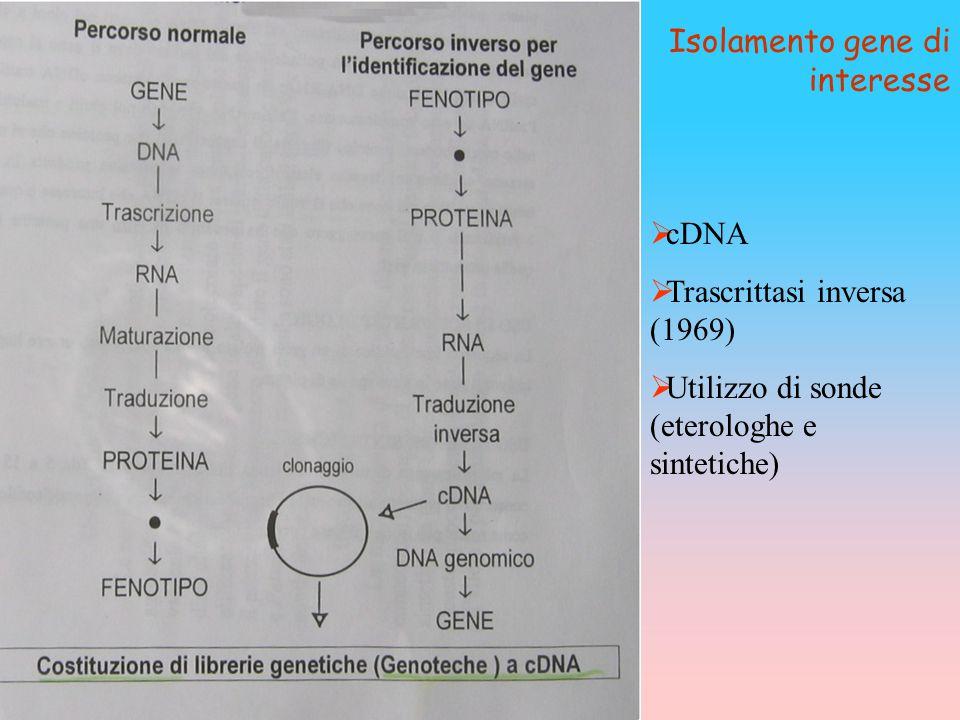 Isolamento gene di interesse
