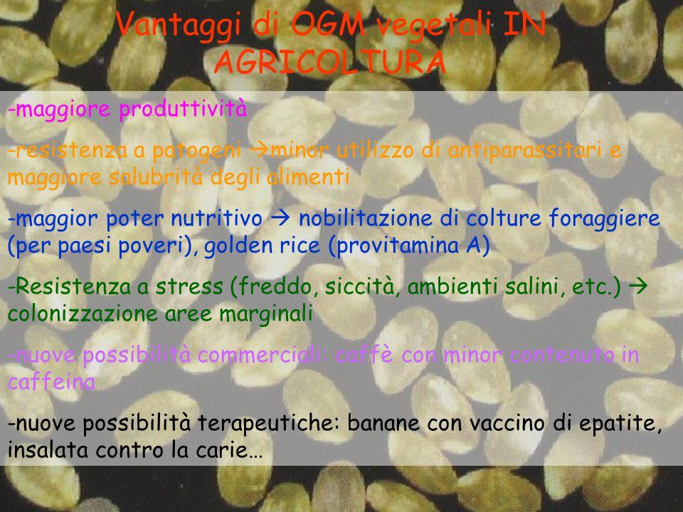 Vantaggi di OGM vegetali IN AGRICOLTURA