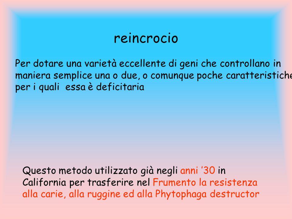 reincrocio