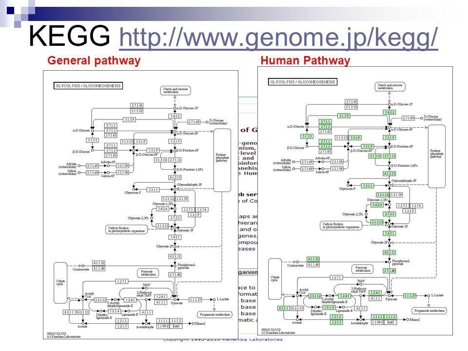 KEGG http://www.genome.jp/kegg/