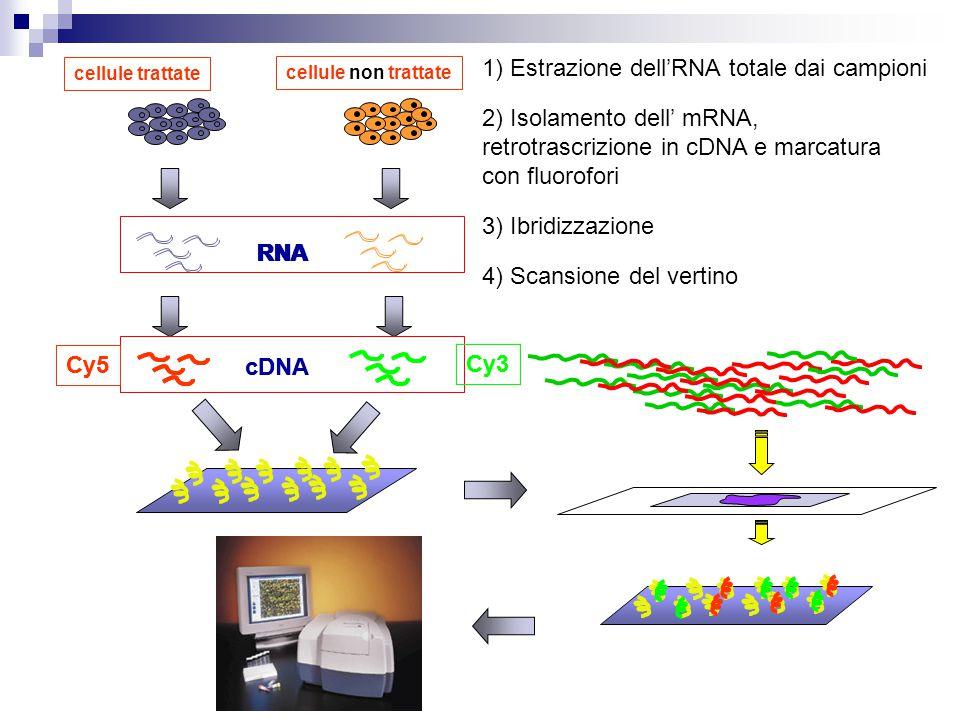 1) Estrazione dell'RNA totale dai campioni