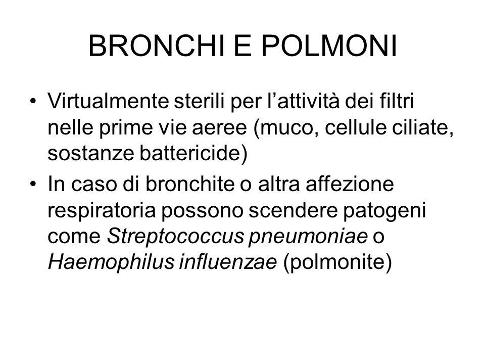 BRONCHI E POLMONI Virtualmente sterili per l'attività dei filtri nelle prime vie aeree (muco, cellule ciliate, sostanze battericide)