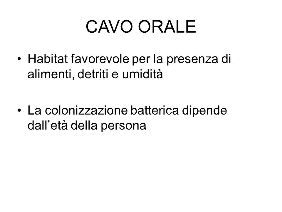 CAVO ORALE Habitat favorevole per la presenza di alimenti, detriti e umidità.