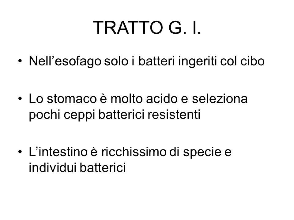 TRATTO G. I. Nell'esofago solo i batteri ingeriti col cibo