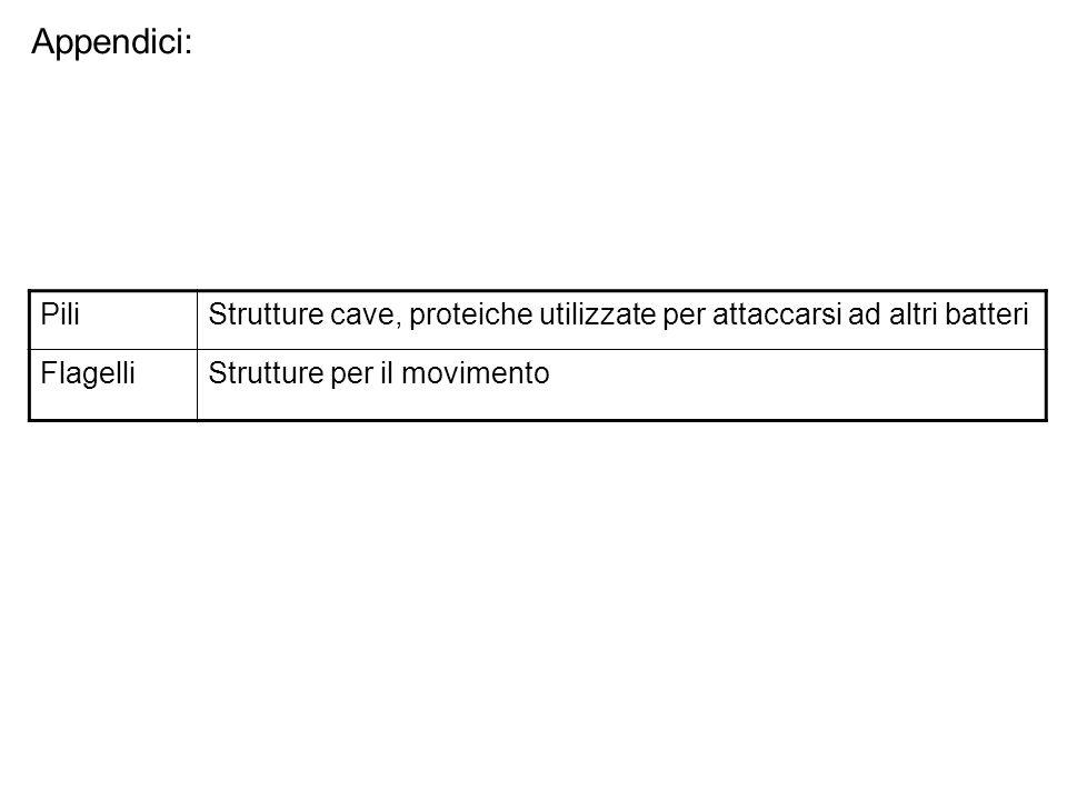 Appendici: Pili. Strutture cave, proteiche utilizzate per attaccarsi ad altri batteri.