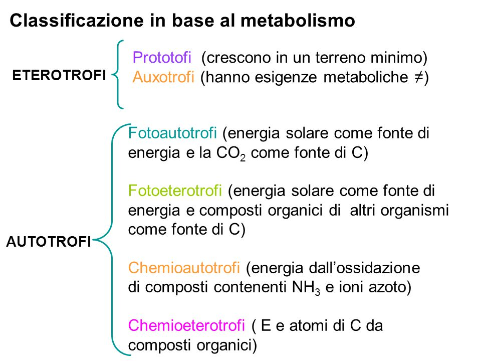 Classificazione in base al metabolismo