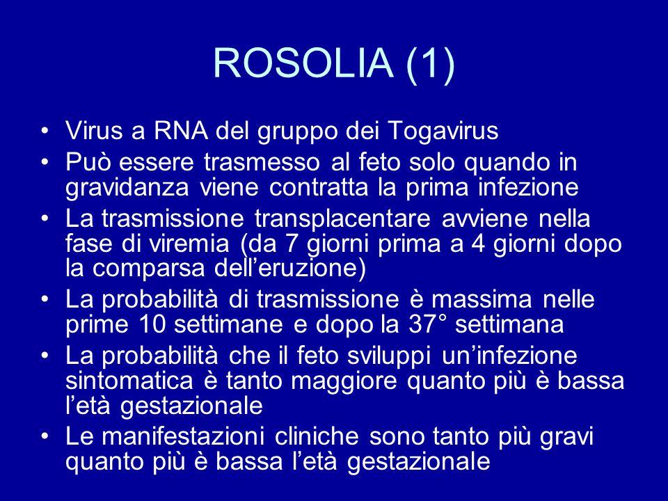 ROSOLIA (1) Virus a RNA del gruppo dei Togavirus