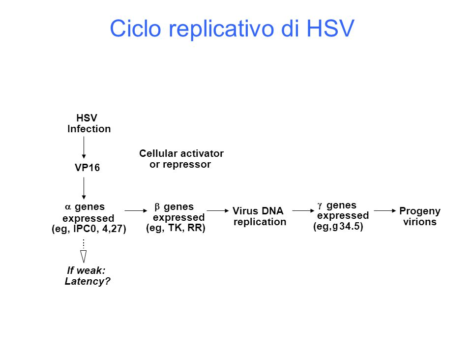 Ciclo replicativo di HSV