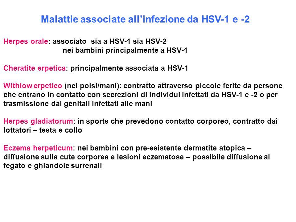 Malattie associate all'infezione da HSV-1 e -2