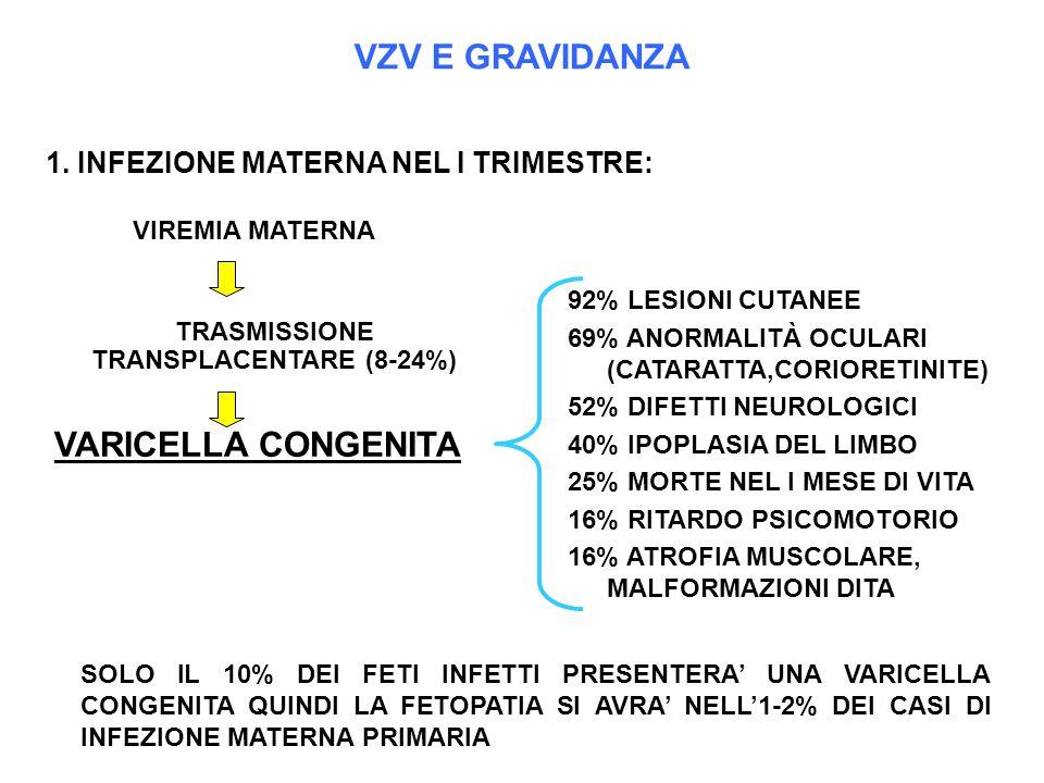 TRASMISSIONE TRANSPLACENTARE (8-24%)