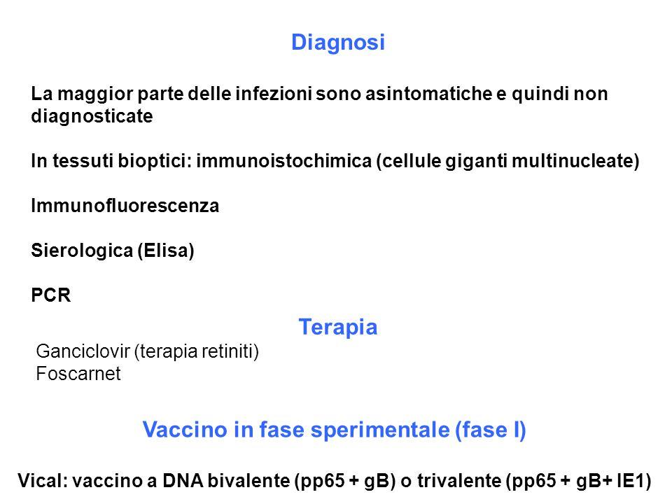 Vaccino in fase sperimentale (fase I)