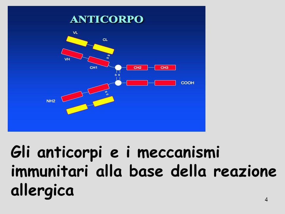 Gli anticorpi e i meccanismi immunitari alla base della reazione allergica