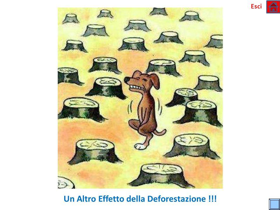 Un Altro Effetto della Deforestazione !!!