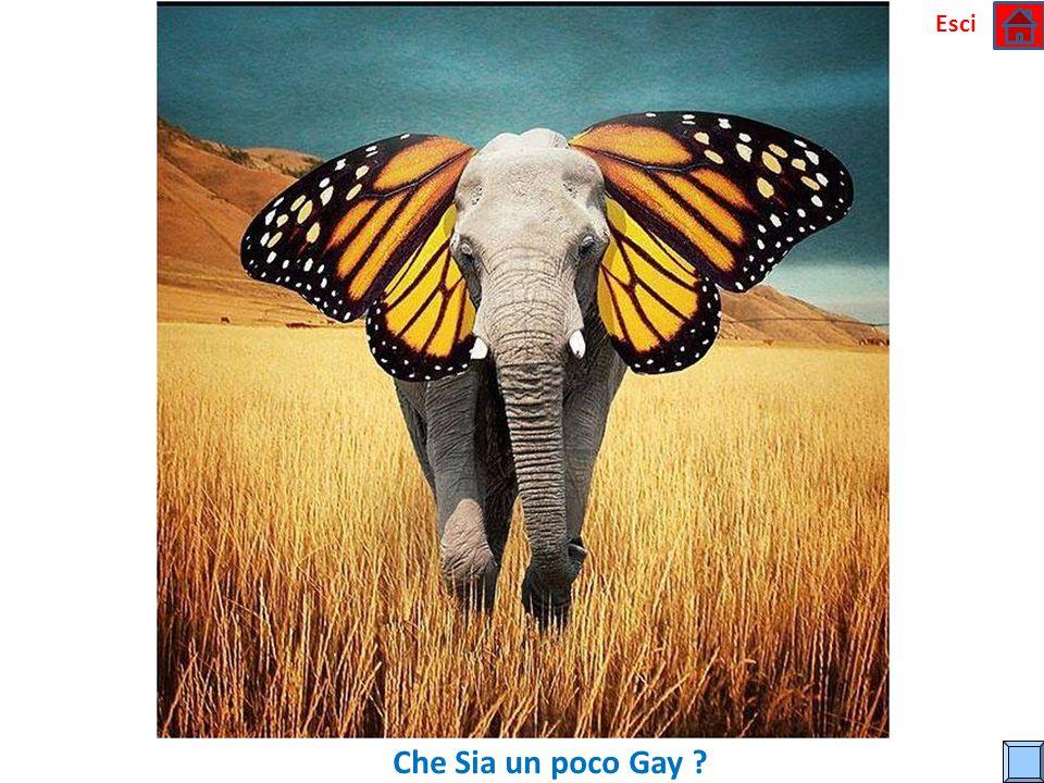 Esci Che Sia un poco Gay
