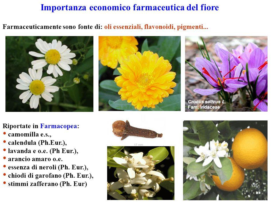 Importanza economico farmaceutica del fiore