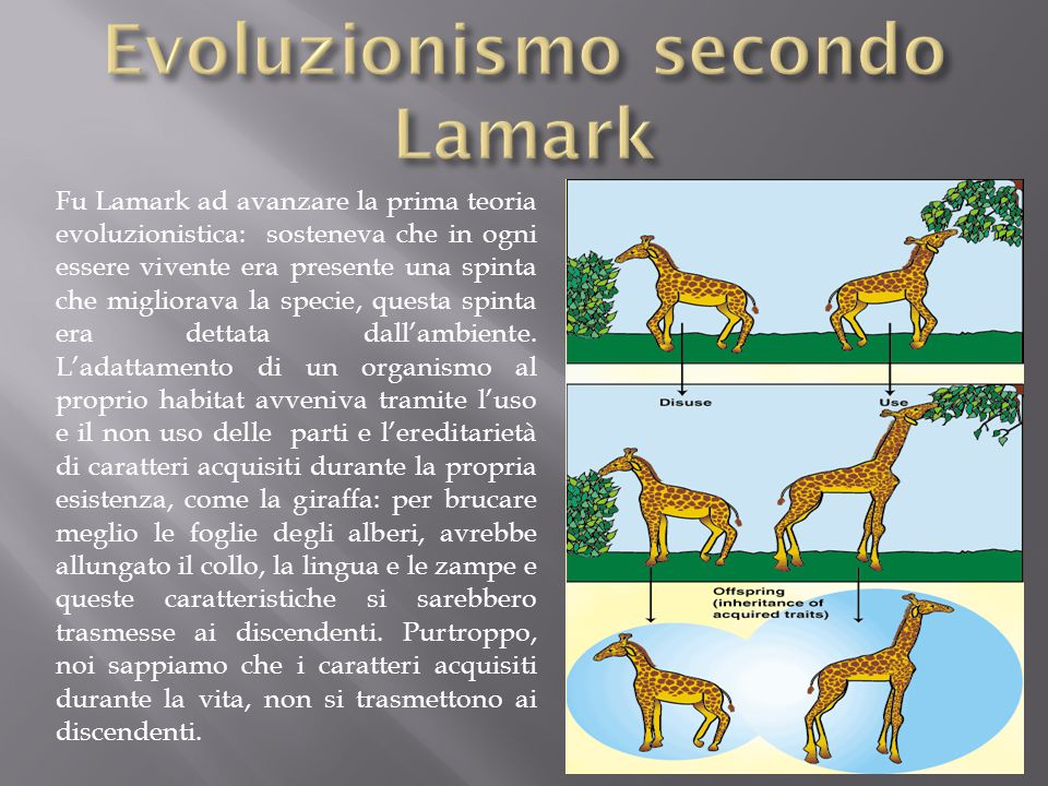 Evoluzionismo secondo Lamark