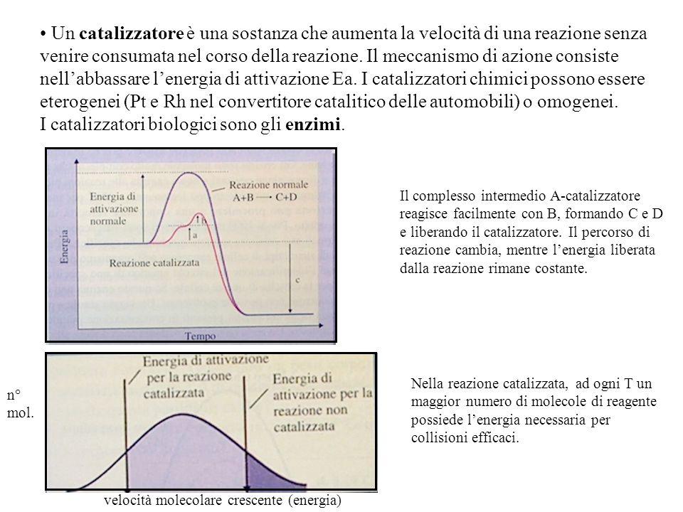I catalizzatori biologici sono gli enzimi.