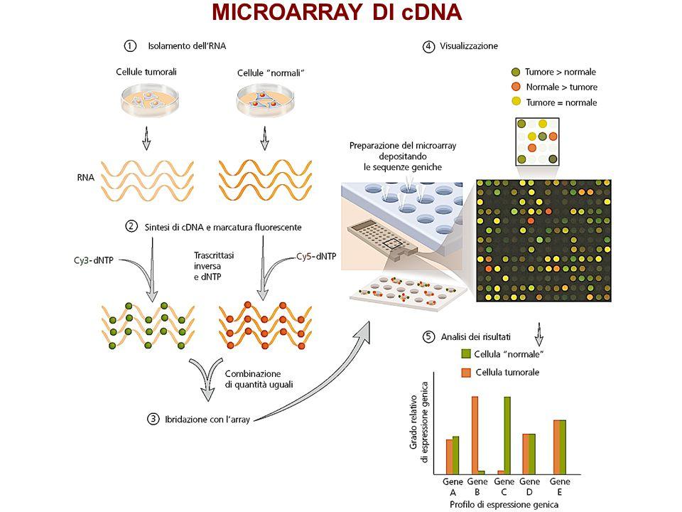 MICROARRAY DI cDNA