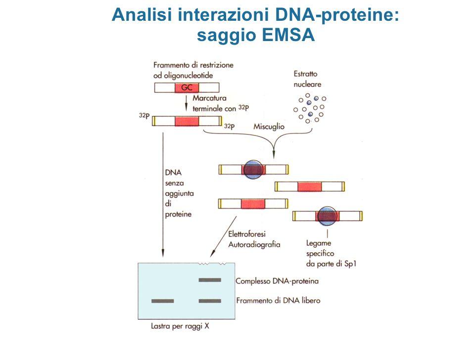 Analisi interazioni DNA-proteine: