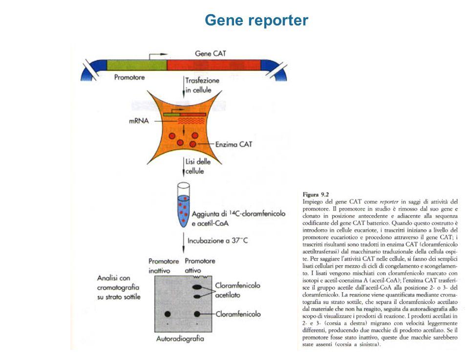 Gene reporter