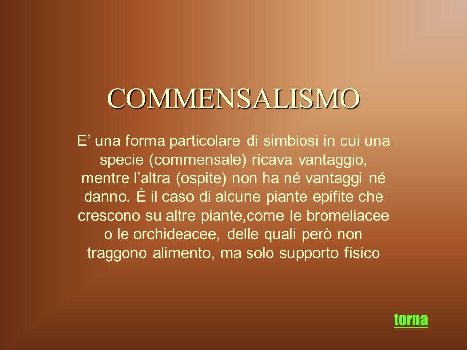 COMMENSALISMO