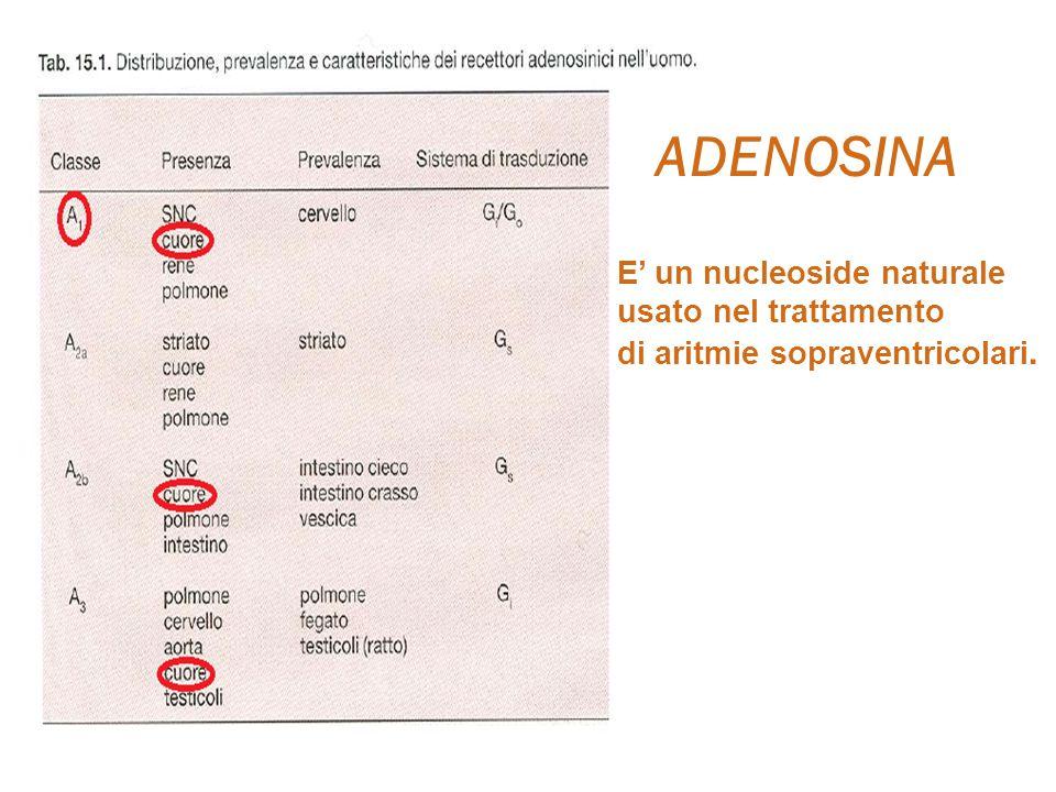ADENOSINA E' un nucleoside naturale usato nel trattamento