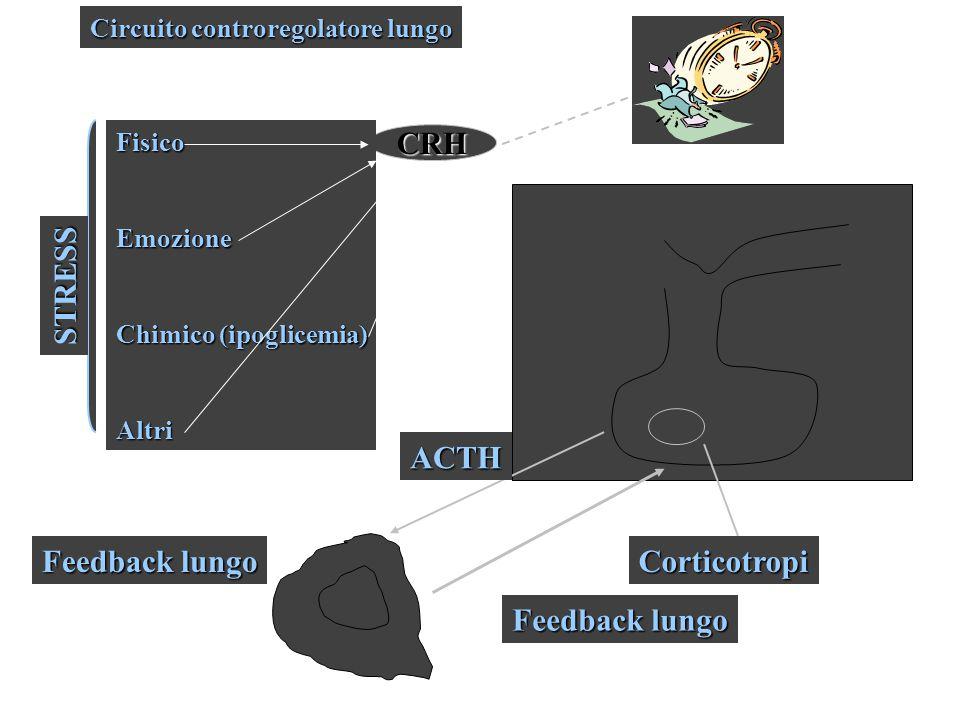 CRH STRESS ACTH Feedback lungo Corticotropi Feedback lungo