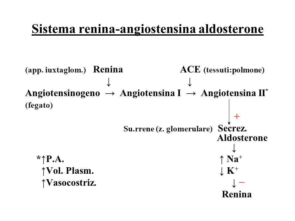 Sistema renina-angiostensina aldosterone