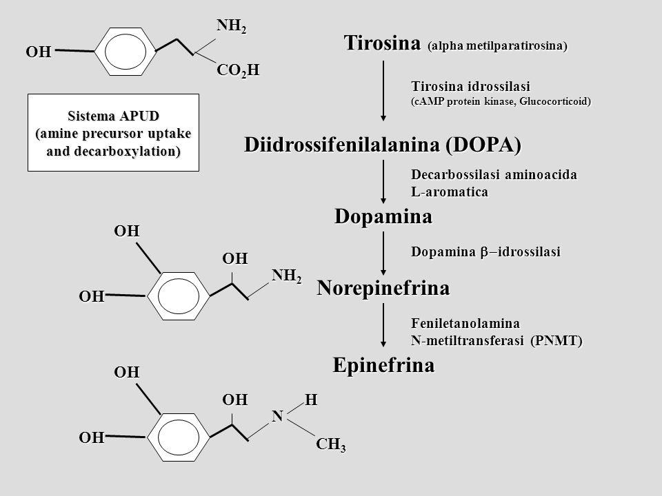 (amine precursor uptake