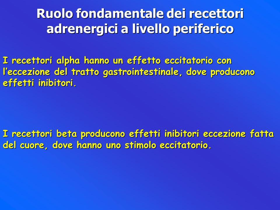 Ruolo fondamentale dei recettori adrenergici a livello periferico
