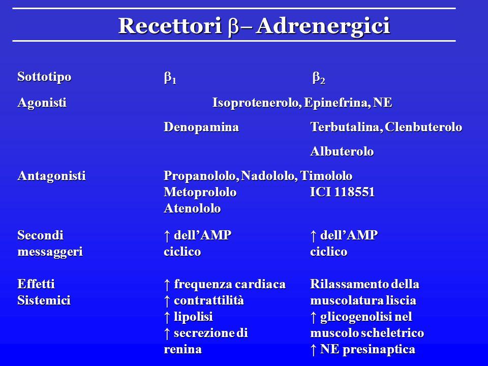 Recettori b- Adrenergici