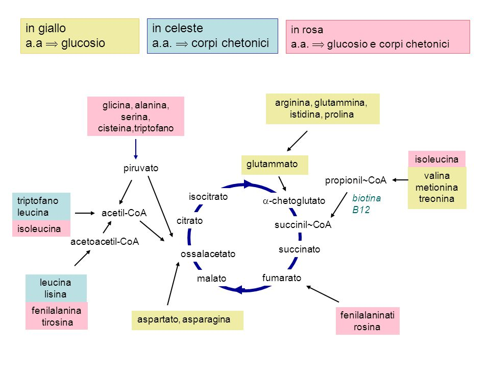 in giallo a.a  glucosio in celeste a.a.  corpi chetonici in rosa