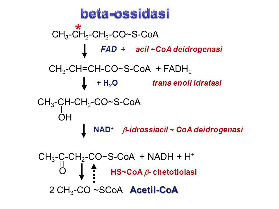 * beta-ossidasi CH3-CH2-CH2-CO~S-CoA CH3-CH=CH-CO~S-CoA + FADH2
