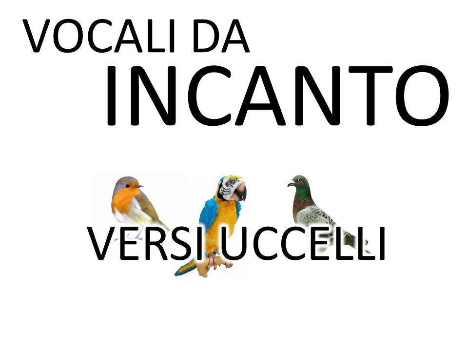 VOCALI DA INCANTO VERSI UCCELLI