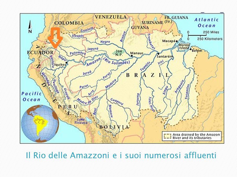 Il Rio delle Amazzoni e i suoi numerosi affluenti