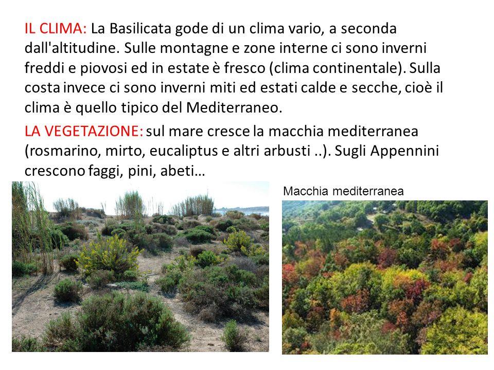 IL CLIMA: La Basilicata gode di un clima vario, a seconda dall altitudine. Sulle montagne e zone interne ci sono inverni freddi e piovosi ed in estate è fresco (clima continentale). Sulla costa invece ci sono inverni miti ed estati calde e secche, cioè il clima è quello tipico del Mediterraneo.