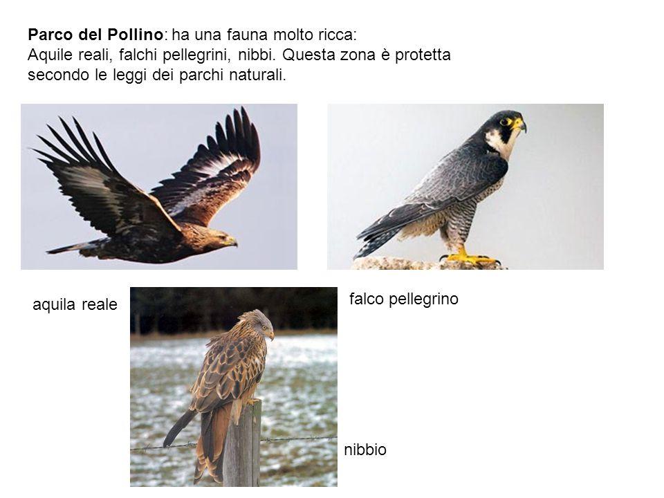 Parco del Pollino: ha una fauna molto ricca: