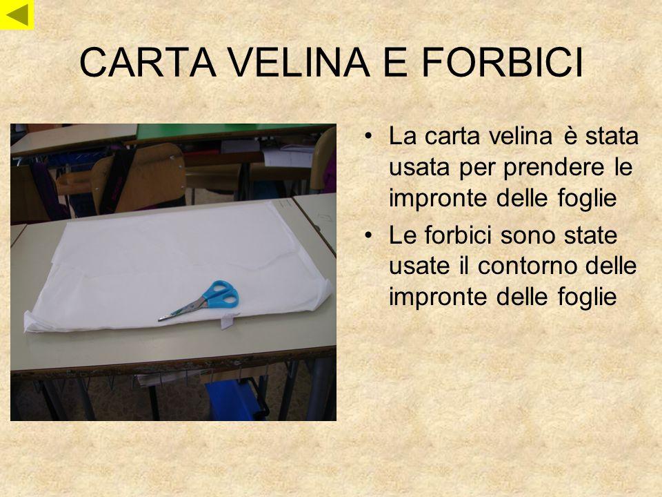 CARTA VELINA E FORBICI La carta velina è stata usata per prendere le impronte delle foglie.