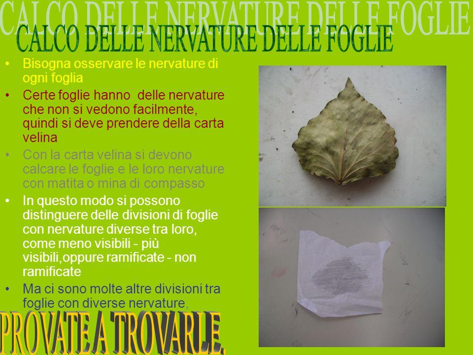 CALCO DELLE NERVATURE DELLE FOGLIE