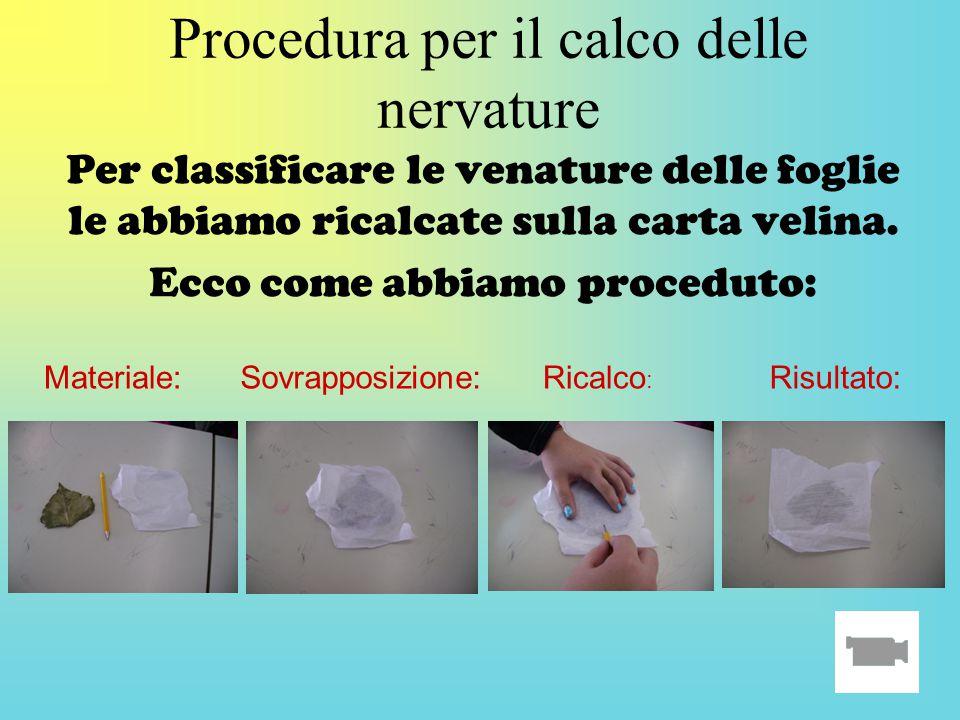 Procedura per il calco delle nervature