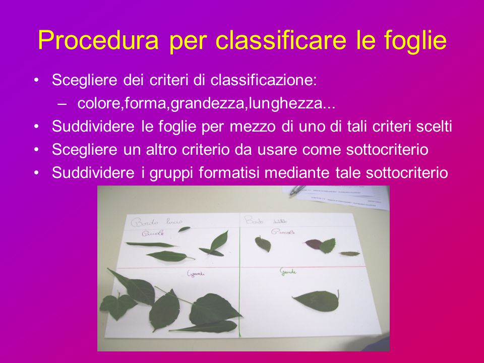 Procedura per classificare le foglie