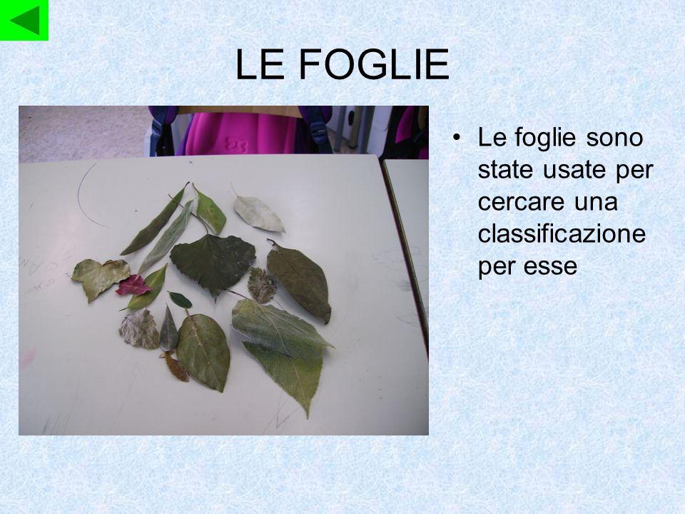LE FOGLIE Le foglie sono state usate per cercare una classificazione per esse Katia, Maria