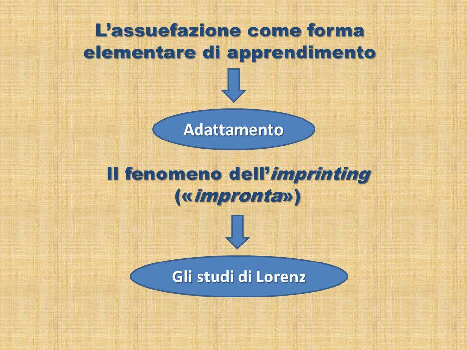 Adattamento Gli studi di Lorenz